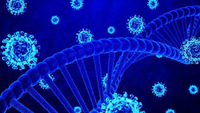 Un virus créé par les humains? Faux