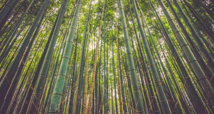 Un matériau de construction haute performance dérivé du bambou
