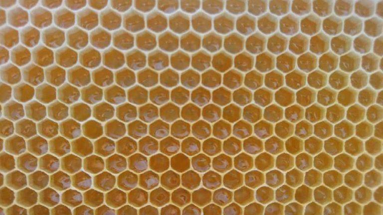 """Apiculteur depuis 20 ans, Pierre Stephan témoigne : """"Mes abeilles n'ont jamais produit autant de miel"""""""