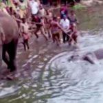 Inde : une éléphante enceinte tuée par un fruit piégé