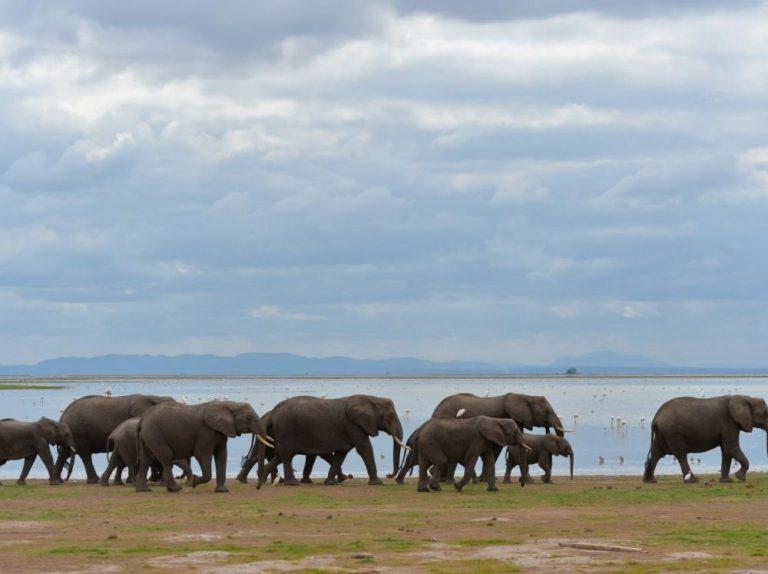 Revue de presse Afrique : les écosystèmes forestiers bouleversés par l'Homme sont de futures bombes biologiques