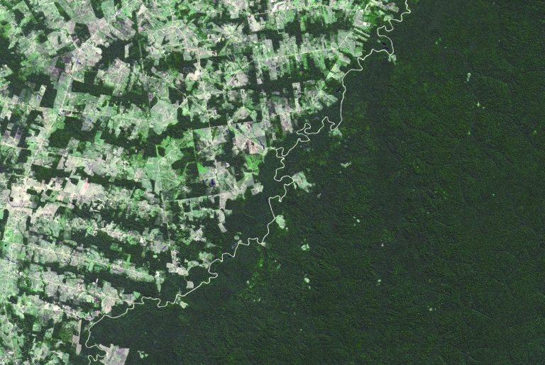 Année noire pour l'Amazonie brésilienne : la déforestation se poursuit à un niveau record