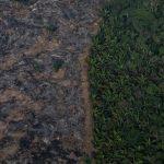 Et pendant ce temps : l'équivalent de la Suisse en forêts vierges a été détruit en 2019