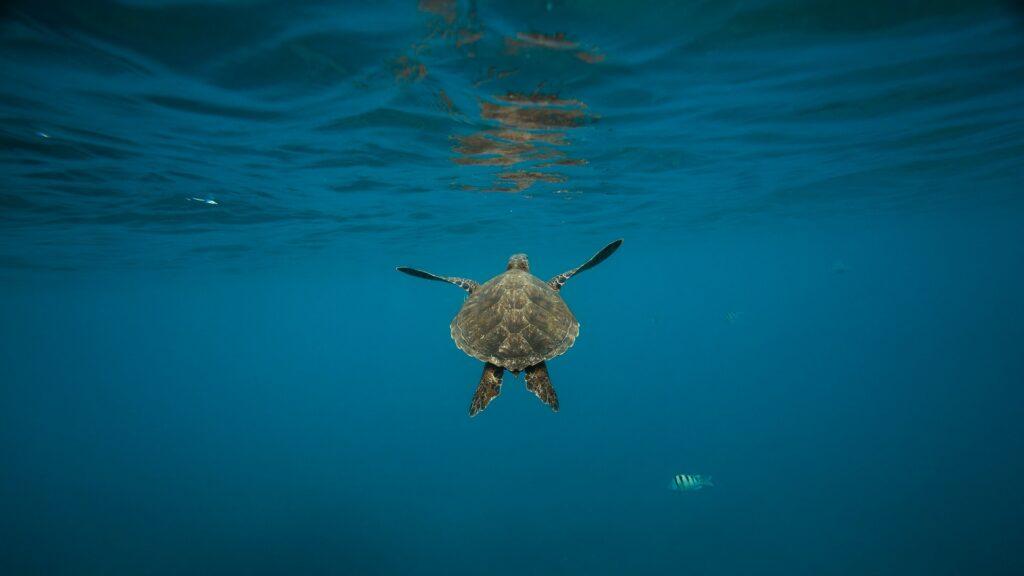 Pourquoi les espèces marines migrent en masse vers les pôles