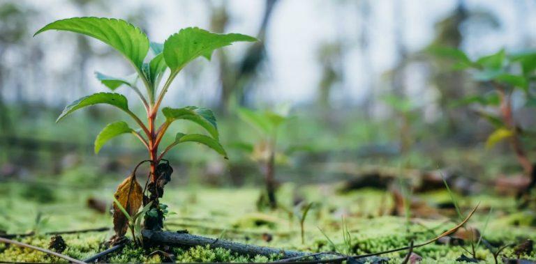 Planter des arbres ne sauvera pas le climat