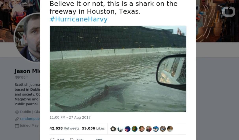 Google Images se met à fact-checker l'authenticité des photos