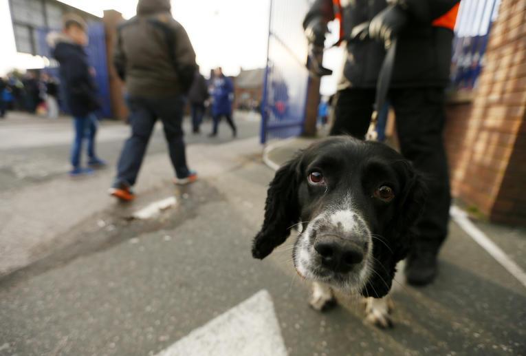Au Royaume-Uni, des chiens entraînés à détecter l'odeur du Covid-19