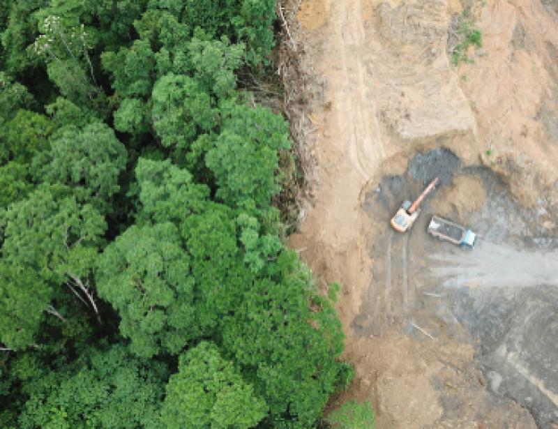 Des fonds d'investissement appellent à l'arrêt de la déforestation en Amazonie