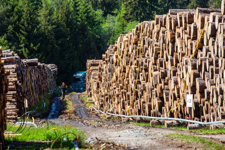 Déforestation.L'abattage des arbres a bondi en Europe depuis 2015