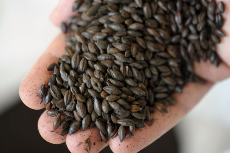 Les semences paysannes enfin autorisées à la vente