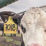 10 choses à savoir au sujet de l'agriculture industrielle