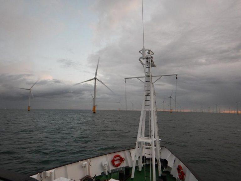 Des effets de l'éolien offshore sur l'écosystème, le point sur 10 ans d'expérience en Belgique