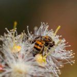 Les forêts sont essentielles pour la pollinisation dans l'agriculture et la biodiversité (FAO)