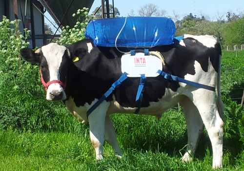 Cows Wearing Backpacks – A Methane Solution