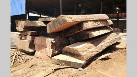Le Gabon sévit :  6 mois de prison pour le DG de la société chinoise SKBG, coupable d'exploitation forestière illégale