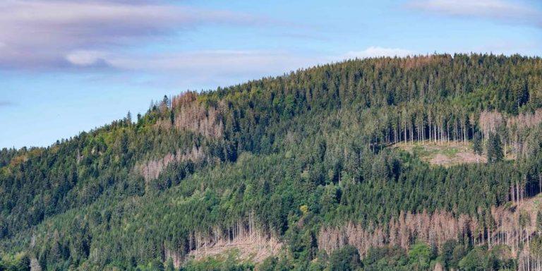 Avec la sécheresse, la forêt «en mode survie»
