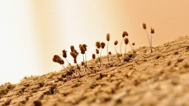 Coating seeds in these microbes superpowers plants' carbon capture abilities