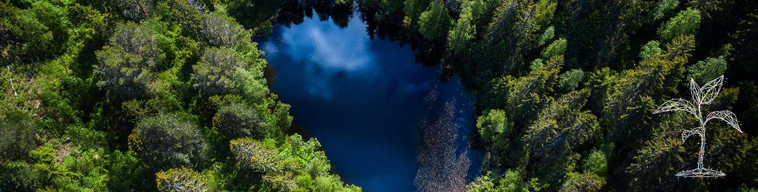 Les puits de carbone au service du développement durable dans un monde en réchauffement