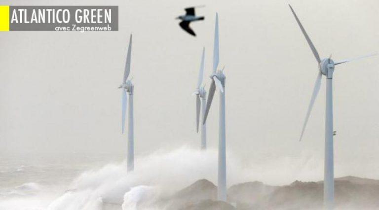 Faux procès : pourquoi les éoliennes ne sont pas le danger pour la biodiversité que l'on veut redouter