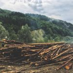 La Roumanie vient de créer une juridiction spéciale pour protéger sa forêt