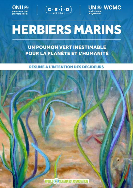 Herbiers marins : un poumon vert inestimable pour la planète et l'humanité