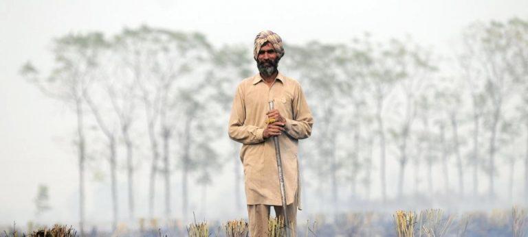 Brûlage des terres : d'autres solutions sont possibles