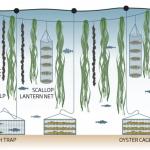 Comment l'agriculture régénératrice des océans pourrait aider notre climat. Entretien avec le fondateur de GreenWave, Bren Smith