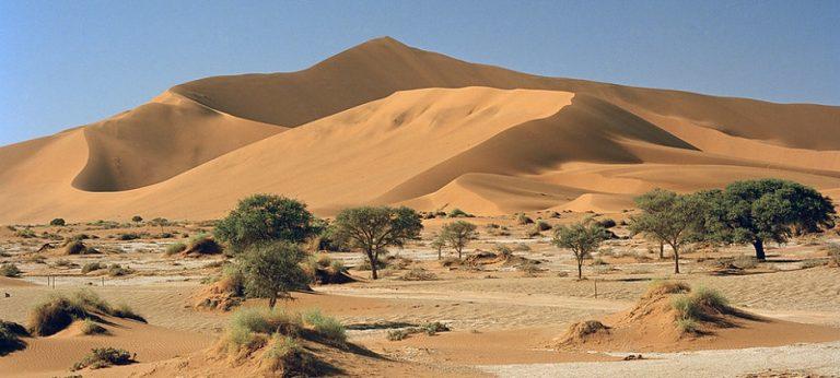 Six façons dont la nature peut nous protéger du changement climatique