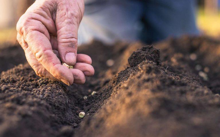 Les plantes affamées par le déclin du phosphate dans les sols
