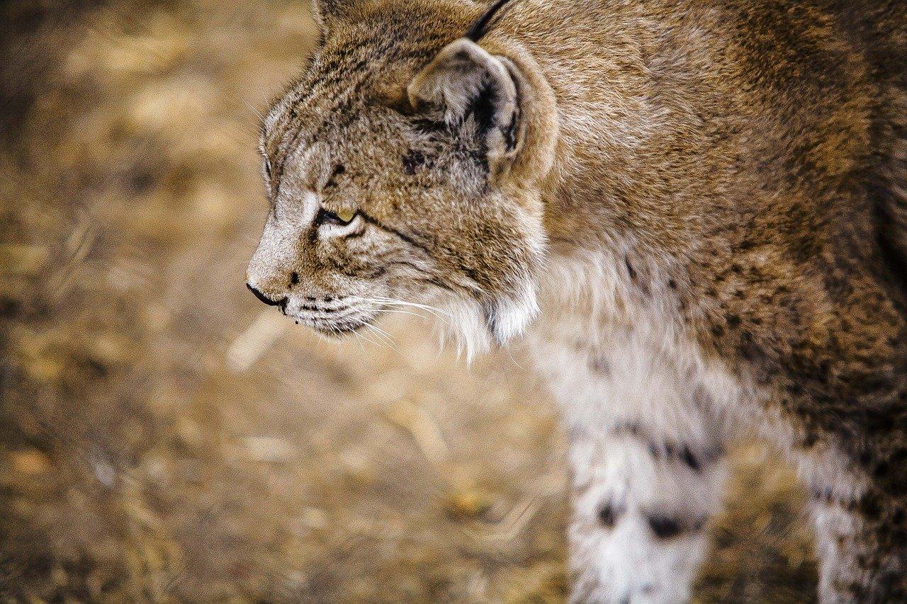 Une trentaine d'espèces sauvées de l'extinction. Comme quoi les efforts de conservation, ça paye !