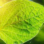 Photofeuille : cette nouvelle technologie de photosynthèse artificielle transforme le CO2 en carburant