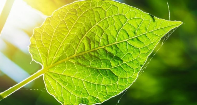 Photofeuille : cette nouvelle technologie de photosynthèse artificielle transforme le CO2 en carburant