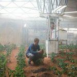 Ce champignon découvert à Tchernobyl pourrait être une clé de l'exploration spatiale