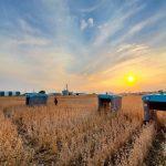 Les robots agricoles de Google prêts à fondre sur les champs