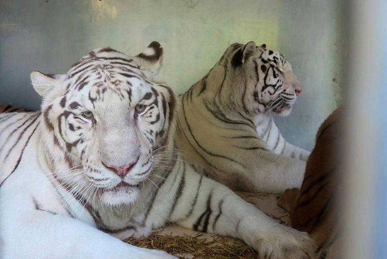 Le gouvernement annonce la fin progressive des animaux sauvages au cirque et dans les delphinariums