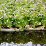 Une ferme aquaponique produit des légumes au cœur de la métropole de Bordeaux