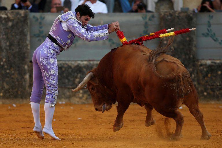 Bien-être animal.Le Parlement européen veut supprimer les aides aux élevages de taureaux de combat