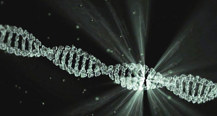 Des chercheurs développent un moyen d'éditer génétiquement les organes, directement