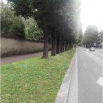 Caen enlève le bitume au pied des arbres pour verdir la ville