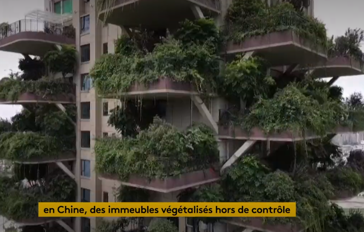 En Chine, des immeubles végétalisés hors de contrôle