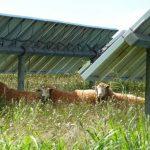 Les parcs photovoltaïques peuvent-ils faire bon ménage avec la biodiversité ?