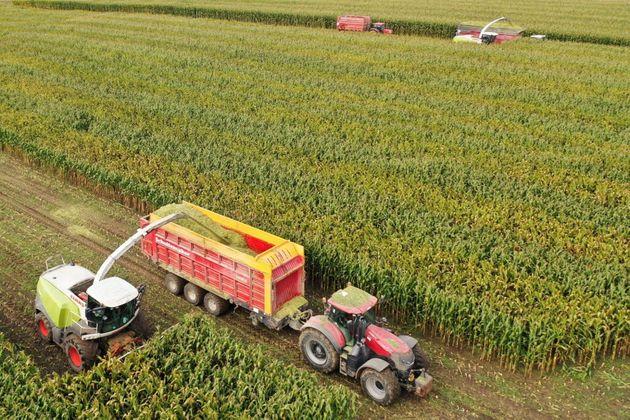 Le lien entre pesticides et leucémie aiguë prouvé par des chercheurs