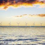 Impact environnemental des éoliennes offshore : globalement bénéfique pour la biodiversité