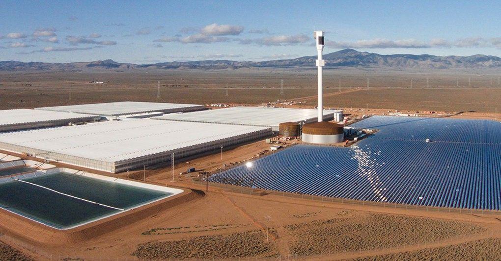 Une ferme dans le désert fait pousser 17 000 tonnes de nourriture