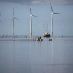 Éoliennes en mer : quel impact sur l'écosystème ?