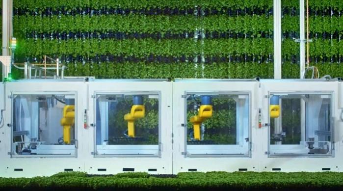 Des fermes verticales supervisées par une IA comme alternative à l'agriculture intensive ?
