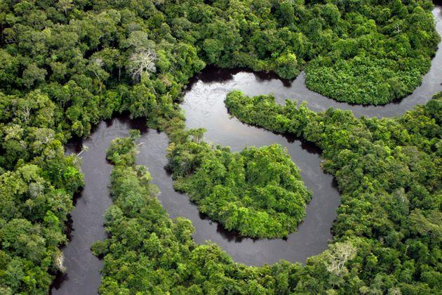 Des parcelles de la forêt amazonienne vendues illégalement sur Facebook