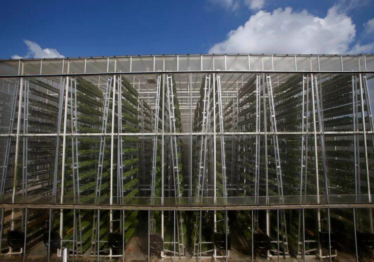 Des fermes verticales pour alimenter le monde