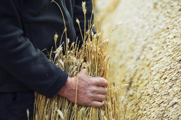 Au Royaume-Uni, une prime pour mettre les agriculteurs à la retraite
