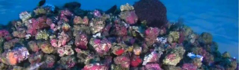 La sauvegarde des coraux passera par des engagements forts